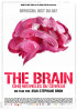 Poster: The Brain